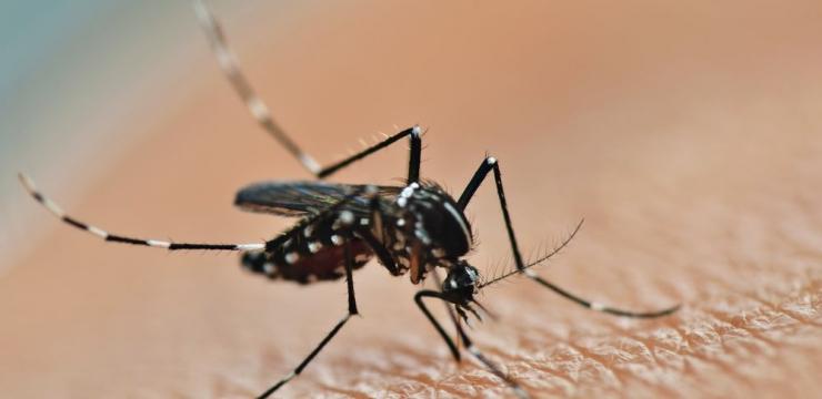 O que você precisa saber sobre a dengue para proteger a sua família